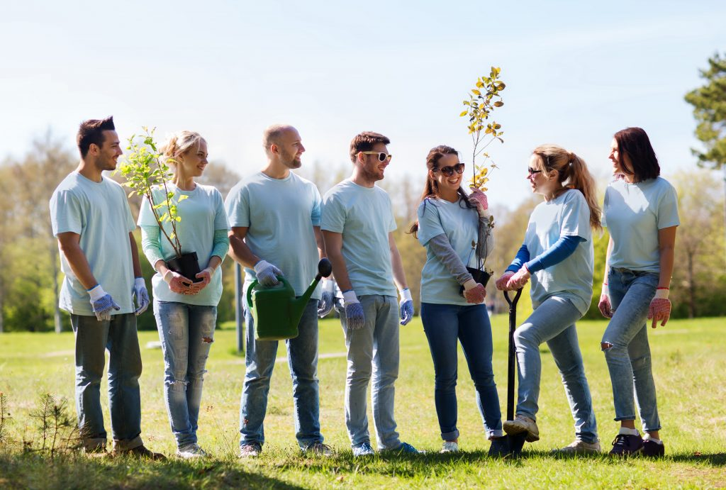 Volunteers work together to plant trees
