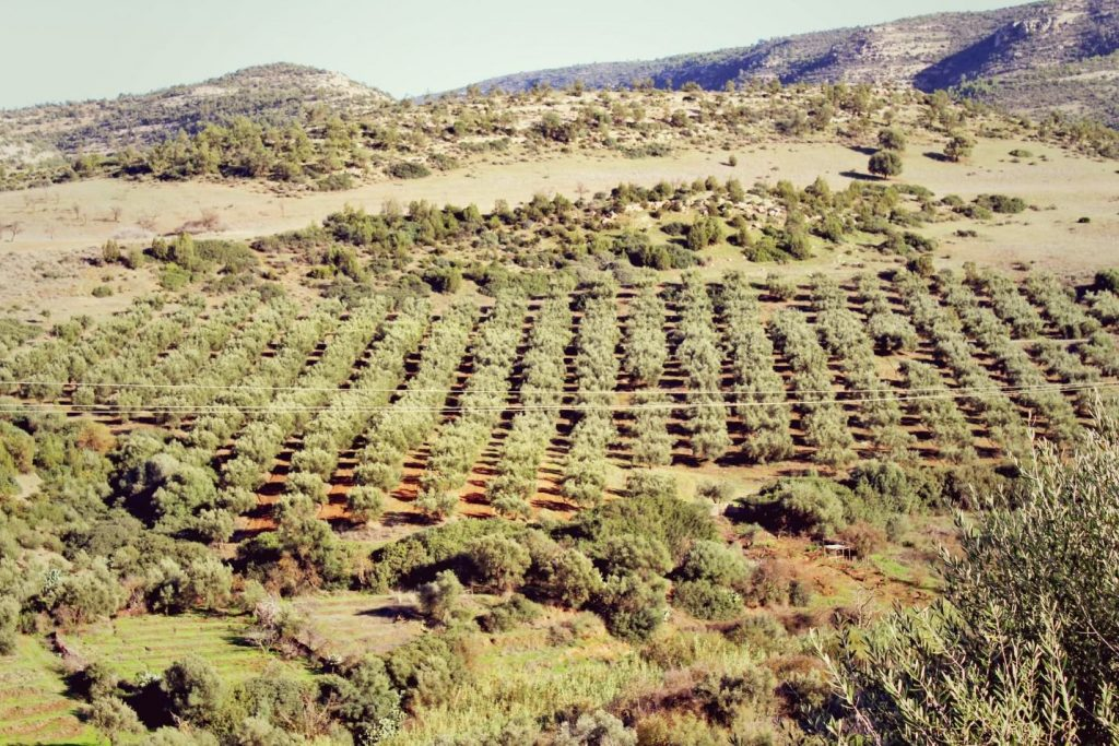 Despite the proximity to the Sahara Desert, Algeria's wineries flourish along the Mediterranean coast. Photo: iStock.