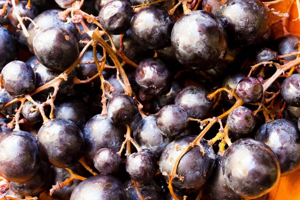 Algerian wine is known for its overripe fruit and rich color as demonstrated by these luscious grapes. Photo: iStock.