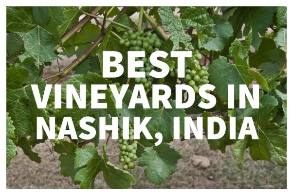 Vineyards in Nashik are the best of India