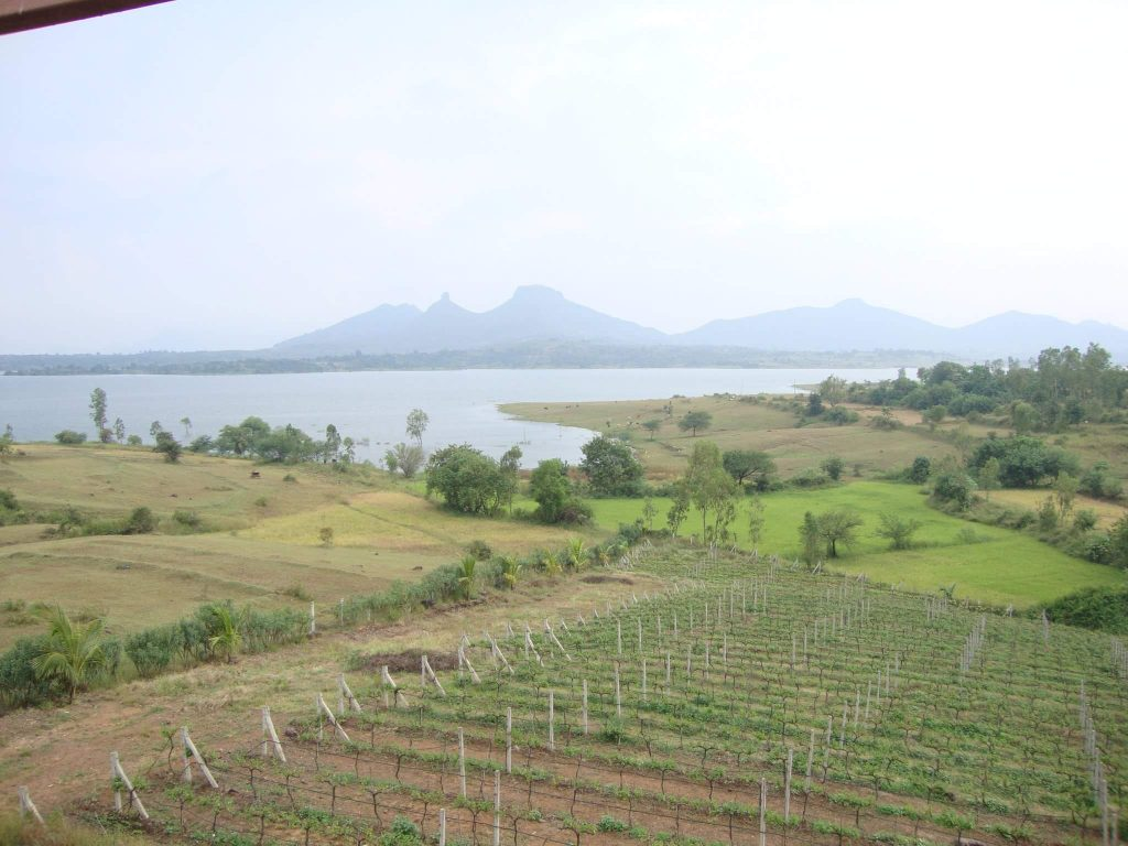 Fields of Vallonne Winery in Nashik, India