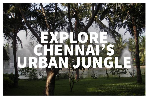 Chennai sightseeing is great inside Guindy National Park!