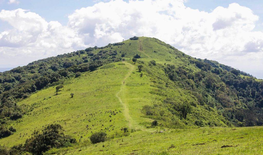 The Ngong hills of Kenya.
