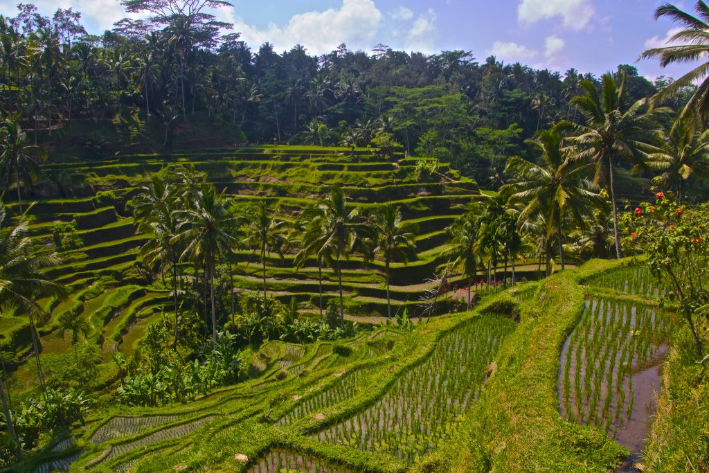 Eat pray and fall in love with the film locations for Tegalalang rice terrace ubud