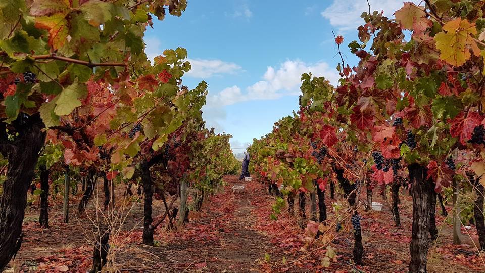The vineyards of Viña Ventisquero. Photo: Viña Ventisquero Facebook