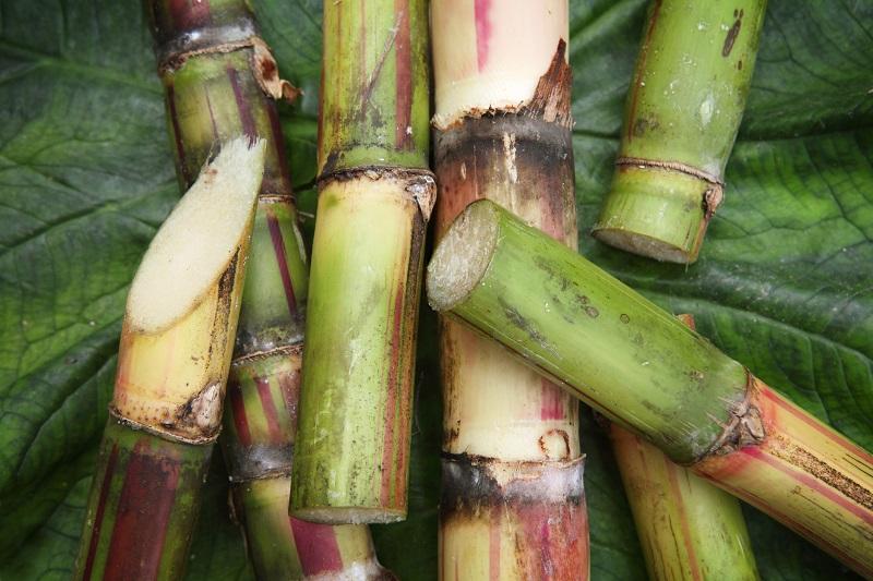 cut sugarcane-basi wine